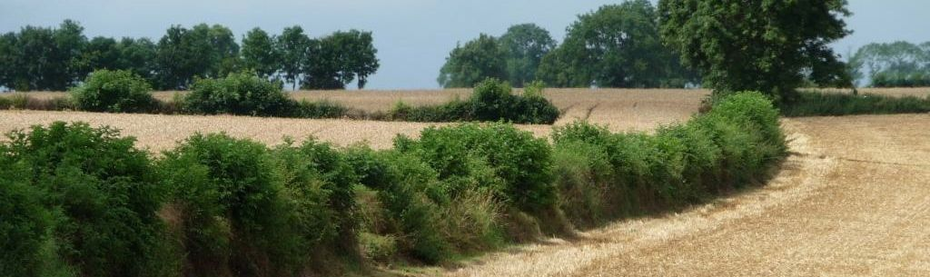 Photo of hedge Copyright Christine Johnstone and licensed for reuse under the Creative Commons Licence